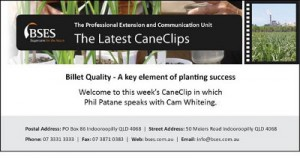 Cane Clips 13 May-web