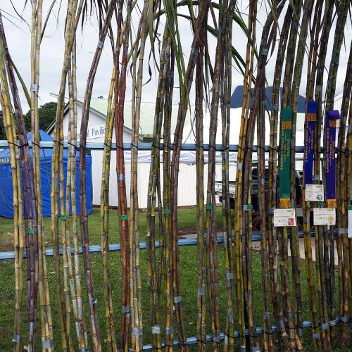 Mossman Show Cane Exhibition 2016